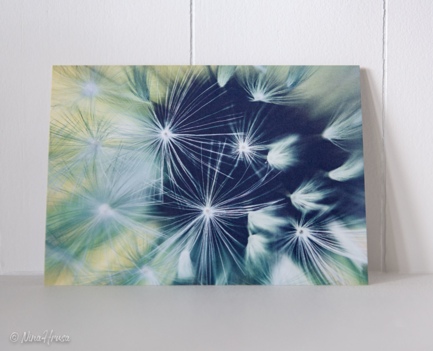 Postkarte Dandelion, Zwischenmomente | Nina Hrusa Photography