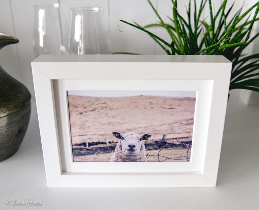 Postkarte lächelndes Schaf in Bilderrahmen, Zwischenmomente | Nina Hrusa Photography