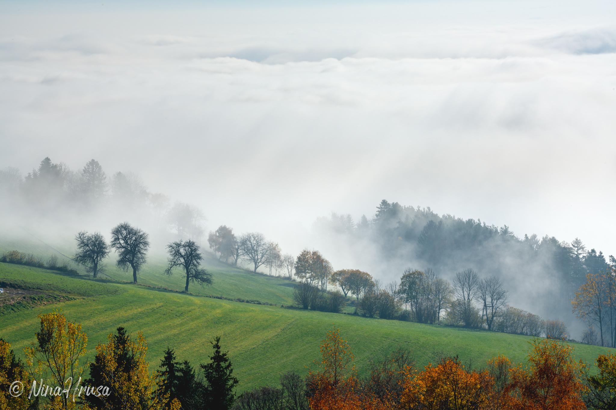 Nebelstimmung, Oststeiermark, Zwischenmomente | Nina Hrusa Photography
